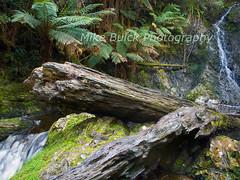 Hogarth Falls, Strahan, Tasmania (Mike Buick) Tags: waterfall rainforest logs tasmania wilderness grdigital ricoh mikebuick