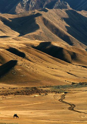 IMG_5751-w Camel