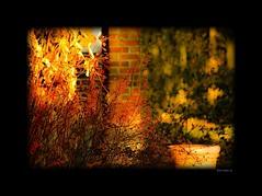 ... novembre en lumière ...!!!