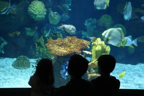 Alana, Benton, and Carson silhouetted at the Columbus Zoo aquarium