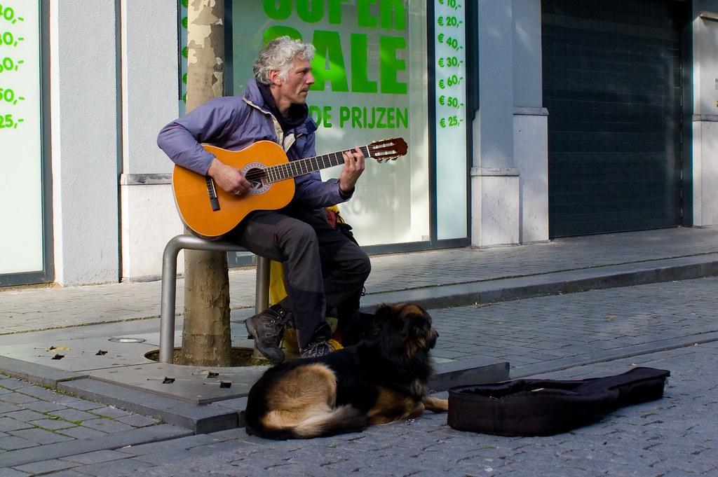 Cat And Dog Serris