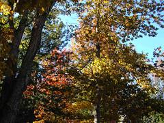 Fall Colors Boulder  DSCN0521