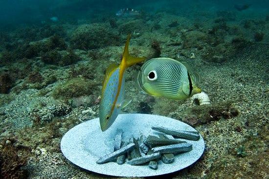 underwater-life