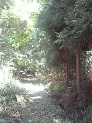 DVC00150 (Tamago Moffle) Tags: plants japan village    narapref  yamazoe  yamabedistrict  mtkouno