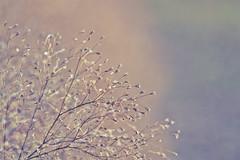 como azahares (Mnica Etcheverry) Tags: light naturaleza macro planta luz nature nikon day dia 2011