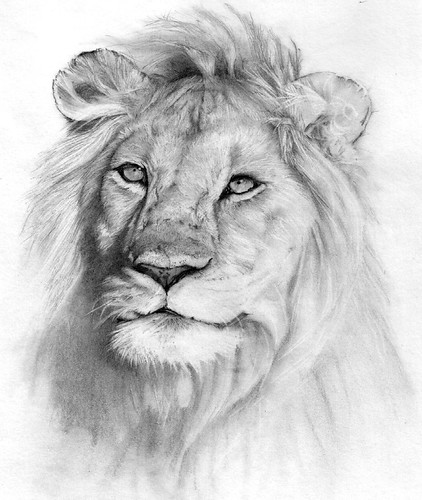 Creative Animals to Draw Draw That Pretty Animal