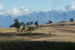Altitude 3800 m sur le plateau (Pérou) (PierreG_09) Tags: peru cuzco plateau cusco col pérou moisson chicon céréales
