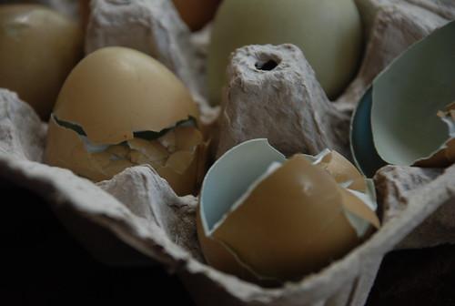 pheasant eggs are blue inside!