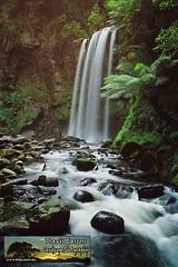 Hopetoun Falls (TravisEaston) Tags: waterfall australia victoria otways hopetounfalls aireriver traviseaston