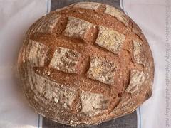 Maize Bread - Corn Bread - Maisbrot 001