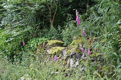 West Craigie 14.07.2009 (Aflon) Tags: west craigie 14072009