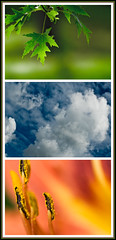 The Colors of Summer (MattGerlachPhotography) Tags: blue orange flower tree green clouds three leaf maple triptych lily bluesky growth colorsofsummer mattgerlachphotography
