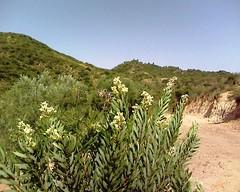 Beni Znassen    (Jamal Elkhalladi) Tags: nature morocco maroc flore beni     berkane znassen   mengouch