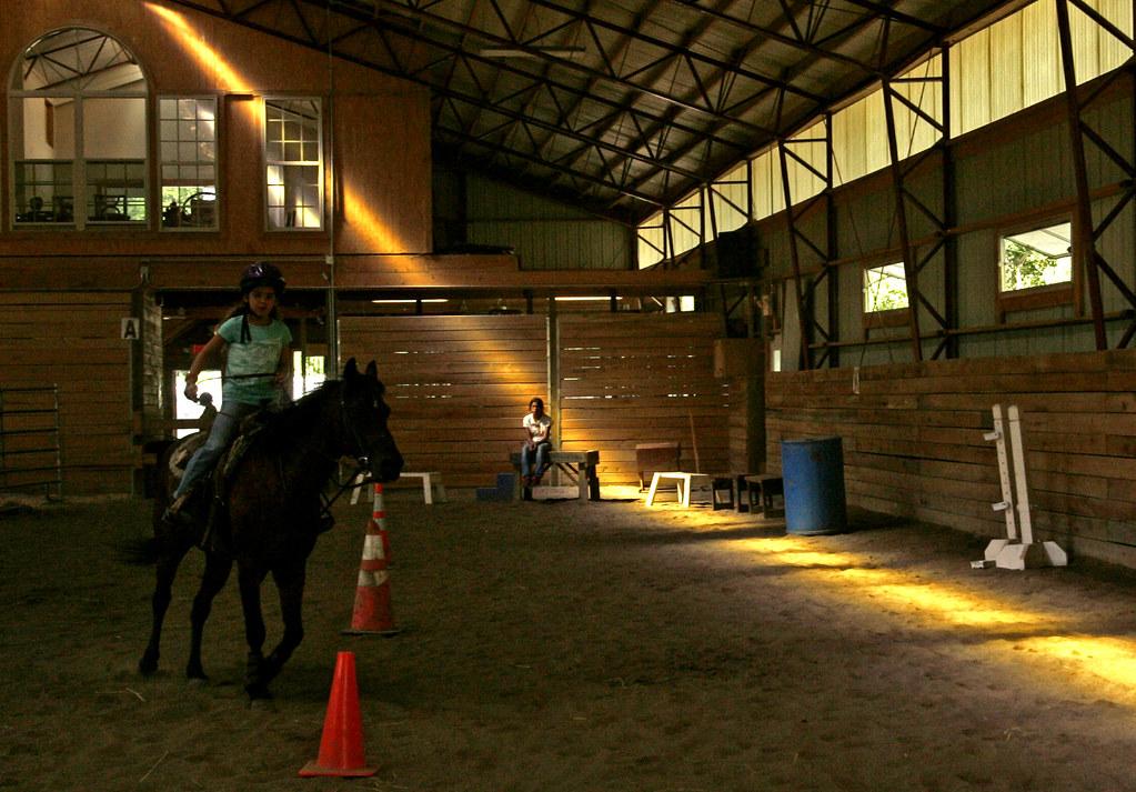 wildart_horse_km_03