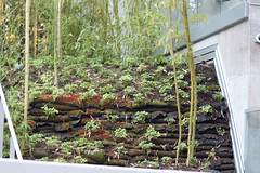 Bamboo Wall (Elsbro) Tags: vancouver seawall coalharbour georgiast