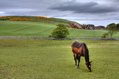 St Abb's Head, Scotland (**Anik Messier**) Tags: flowers horse field birds landscape scotland countryside wildlife landmark cliffs pastoral berwickupontweed berwickshire stabbshead nationalnaturereserve scottishborder citrit theperfectphotographer berwickshirecoast welcomeuk