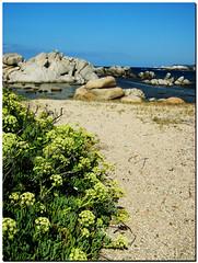 Isola di Lavezzi e i suoi Fiori (Mizarin) Tags: landscape foot see mar mare corse corsica barbara piedi onde orme sabbia schiuma bassi mizarin