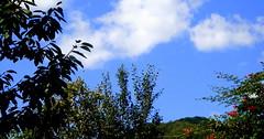 fel-fel (debreczeniemoke) Tags: blue sky up view ég fel kék kilátás morgó