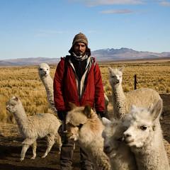 Moi au milieu des alpacas, Crucero, Puno, Pérou