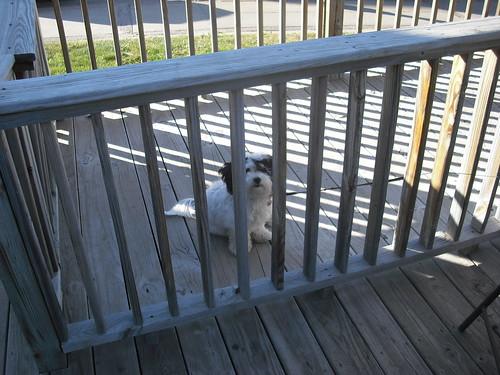 Zoe In Jail!