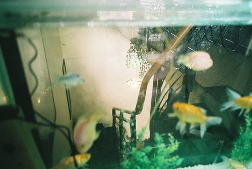 through the fish tank