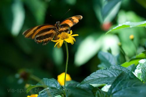 Butterfly Pavillion 05