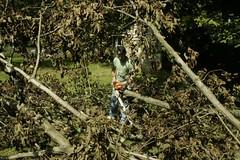 _MG_6470.JPG (zimbablade) Tags: trees sleepyhollow dougmiller videopoem
