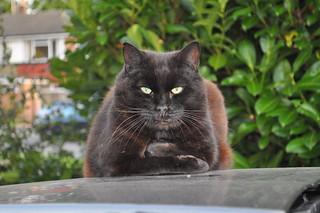 My semi 'adopted' black cat