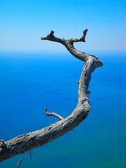 Standing above ... (pantherinia_hd Anna A.) Tags: travel blue sea summer vacation sky seascape tree nature island europe mediterranean branch aegean hellas greece destination rodos rhodes rodi rhodos cubism abigfave platinumphoto impressedbeauty diamondclassphotographer flickrdiamond rubyphotographer mygearandmepremium mygearandmebronze mygearandmesilver mygearandmegold mygearandmeplatinum mygearandmediamond aboveandbeyondlevel1 aboveandbeyondlevel2