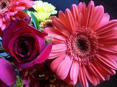 Flowers_1009f
