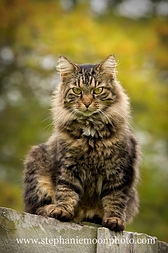 Barn Cat 2