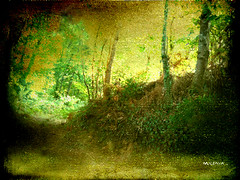 En el bosque...    In the woods... (tan.solo_milenia .) Tags: naturaleza bosque poesia soe canto meraviglioso fineartgallery sharingart awardtree beyondclick newenvyofflickr miasbest musicsbest flickrvault trolledproud
