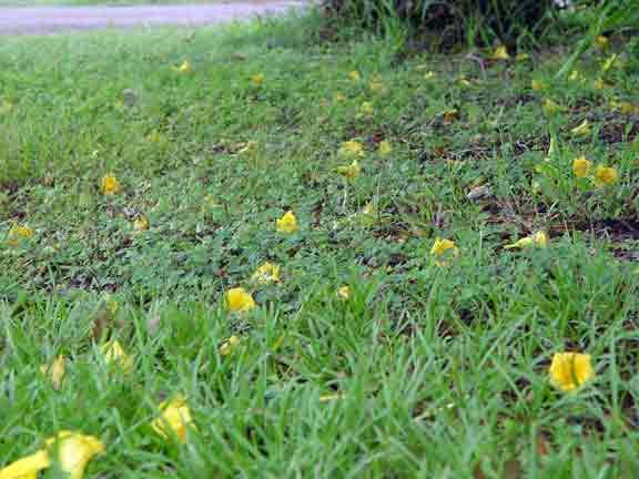fallenflowers.jpg