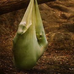 an unyielding limb (brookeshaden) Tags: woman selfportrait animal sac fantasy figure hanging phallic limb pygmalion unyielding brookeshaden