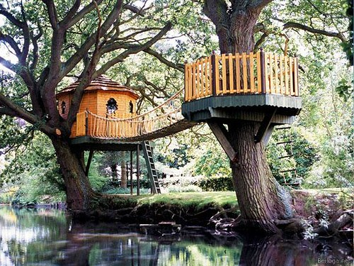 There Secret Tree House!