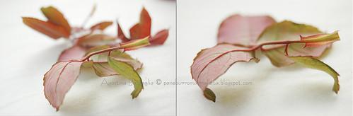 foglie br copia