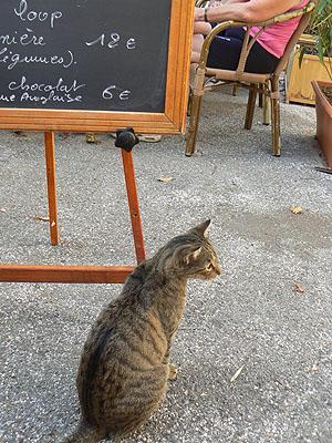 le chat et l'ardoise.jpg