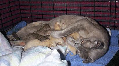 Christmas new born kittens