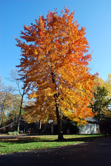 Fall Foliage (blmiers2) Tags: autumn autumnfoliage trees fallleaves newyork color tree fall nature beautiful leaves landscape geotagged leaf nikon october colorful seasons fallcolor fallcolors branches autumnleaves autumncolors fallfoliage foliage webster autumntrees autumncolor fallfoilage autumntree autumnfall leavesautumn newenglandautumn seasonfall autumntheme theseasons autumnpictures autumnseason leafautumn d40x autumnstreet autumnmaple picturesoffall forautumn leaveschangecolor autumnmonths blm18 blmiers2