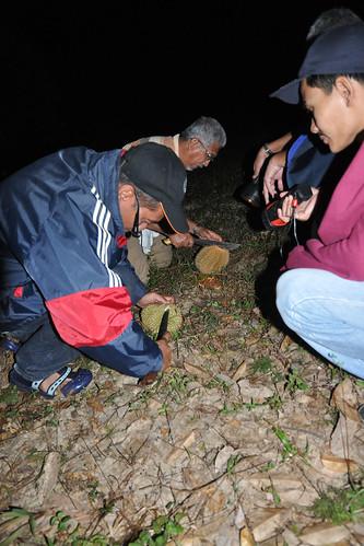 Dusun malam7