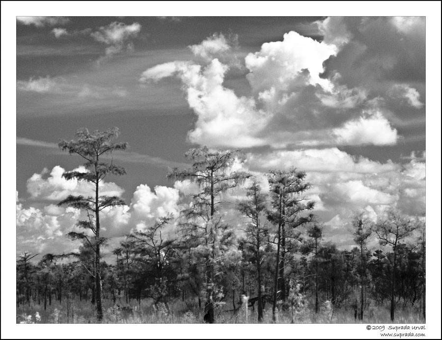 Everglades in Infrared - 6