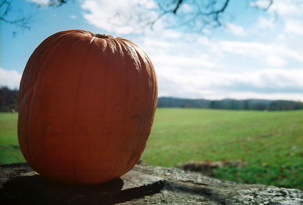 halloween: pumpkin (blog only)