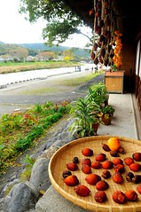 Persimmons drying outside eel place, Oharai Machi, Ise