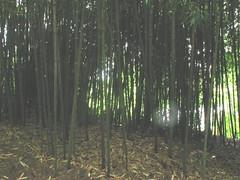 Chinese Scholar's Garden 3