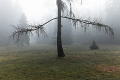 QE Park (John Goldsmith) Tags: canada tree nature fog vancouver bc waxypoetic derkaiser queenelizibethpark lpv122009 charityprintauction finercollection1 20052011johngoldsmithphotographyallrightsreserved