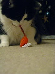 Josie went straight to the orange mouse