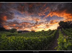 Feries clestes (Girolamo's HDR photos) Tags: blue light sunset red sky sunlight france tree art nature clouds canon french landscape photography vineyard spring savoie hdr apremont rhnealpes girolamo photomatix tonemapping canoneos50d cracchiolo omalorig wwwomalorigcom gettyimagesfranceq2