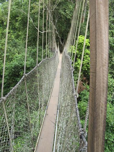 Kakum walkway