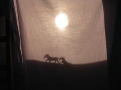 Shadow Play (Greg Sweetman) Tags: silhouette shadows sheet shadowplay photocompetition 200907