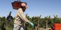 Los pedidos de los empresarios agrícolas al gobierno de Celso Jaque